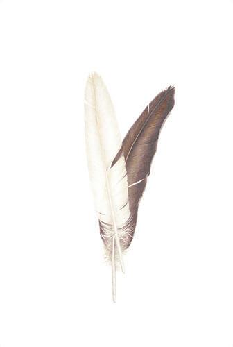 American Bald Eagle Feathers