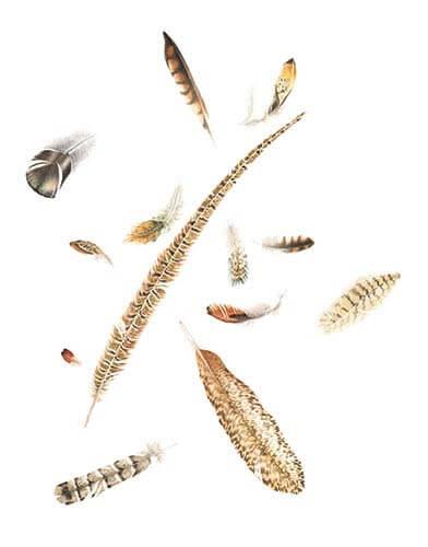 Colorado Feathers