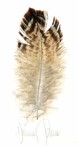 Pheasant Breast Feather