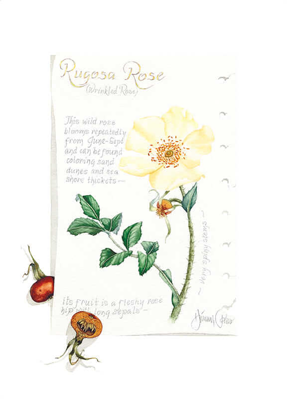 Rugosa Rose Journal Page