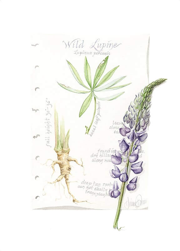 Wild Lupine Journal Page